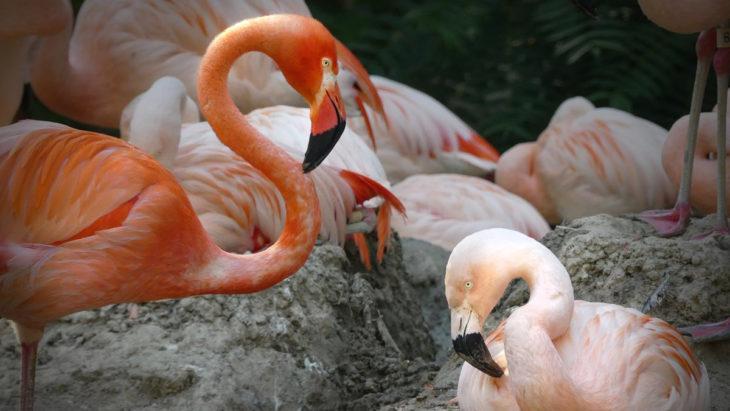 Gay Flamingos Find Love At Zoo…