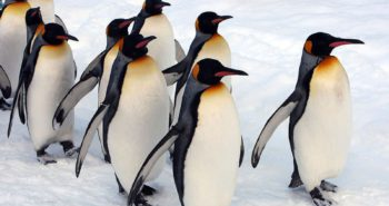 These Gay Penguins Should Sue If Their Adoption Doesn't Work Out