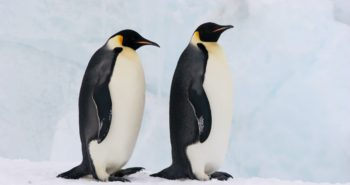 'Exemplary parents': 2 gay penguins have adopted an abandoned egg in Berlin Zoo